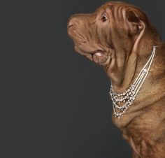 Psie diamenty EXAMPLE.PL
