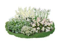 Sie haben ein halbschattiges Eckchen in Ihrem Garten, das noch ein wenig Blütenschmuck vertragen kann? Dann empfehlen wir Ihnen dieses kleine Bergenienbeet, dessen Pflanzen mit ihren weißen Blüten für willkommene Lichttupfer sorgt....