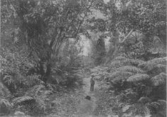 15. This ethereal photograph was taken in Hawaii Island's Puna District in the late 1800s.