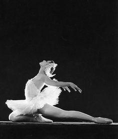 my favourite ballet :) swan lake Ballet Bolshoi, Ballet Dancers, Ballerinas, Ballet Russo, Swan Lake Ballet, Dancer Photography, Ballet Images, Russian Ballet, Ballet Beautiful