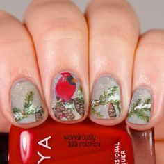 Winter skittle mani:  Cardinal perched on snow-covered conifer tree branch.