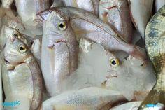 Λυθρίνι, λυθρινάκι…αφήνεις, πάντα, γεμάτο το στομαχάκι! Τα λυθρίνια του Πσαρά, είναι Α' Ποιότητας, φρέσκα, και πεντανόστιμα – όπως άλλωστε, όλα τα ψάρια μας!   Με ένα τηλέφωνο στο ☎ Delivery: 2310232228, τα λυθρίνια μας, ή οποιαδήποτε άλλο ψάρι από την ποικιλία μας, έρχονται στο χώρο σας!