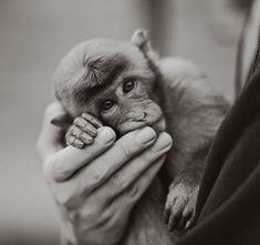 Monkey Baby Pictures (2)
