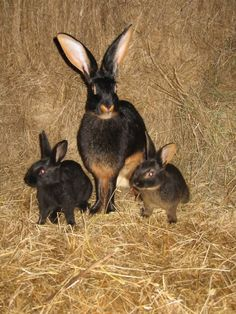 feeling all broody for baby rabbits - Rabbits United Forum