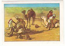 N°3 CARAVAN DJOUF NOMAD SAHARA ALGERIE ALGERIA DROMADAIRE AFRICA AFRIQUE IMAGE