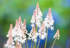 10 flerårige planter der pynter i din have og er umulige at slå ihjel
