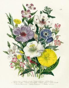Antique botanical prints? :-)