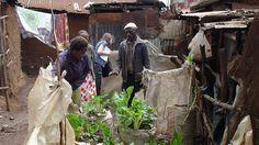 Vertical Farms: Finding Creative Ways to Grow Food in Kibera
