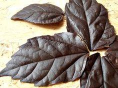 CAIETUL CU RETETE: Cum se fac frunzele din ciocolata pentru tort? Pasta, Diy Projects To Try, Kitchen Hacks, Food Art, Cake Recipes, Cake Decorating, Plant Leaves, Good Food, Food And Drink