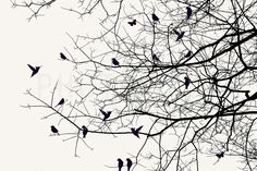 Shadowplay - Tapetit / tapetti - Photowall