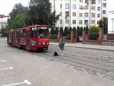Dog refuses to let the tram pass