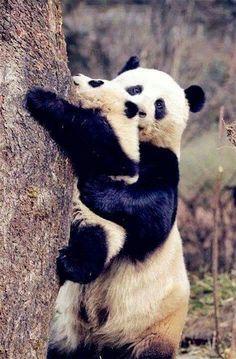 Panda mama és kicsinye