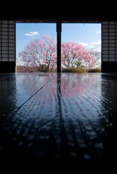 Mito Kairakuen Garden, Ibaraki, Japan 水戸偕楽園