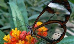 Belleza de las flores y las palabras | Naturaleza - Todo-Mail