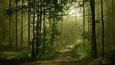 forest road, trees, sunbeams, forest, fog x 768 px] - Nature/Landscapes - Pictures and wallpapers Forest Wallpaper, Tree Wallpaper, Nature Wallpaper, Forest Trail, Forest Path, Forest Road, Woodland Forest, Forest Scenery, 257