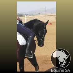 Outcast Romeo - Unregistered Thoroughbred - Horses for Sale Detail Horses For Sale, Thoroughbred, Animals, Animales, Animaux, Animal, Animais
