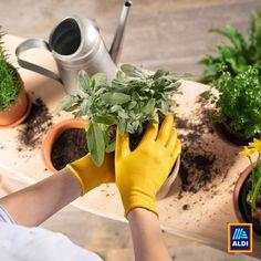 Keresd fel weboldalunkon aktuális ajánlatainkat és készüljünk együtt a tavaszi kertészkedésre! Minden, Instagram, Diy, Bricolage, Do It Yourself, Homemade, Diys, Crafting