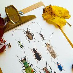 """Kunstdruck """"**Käfer**"""" aus der Reihe Insekten. Aquarell, Print, Illustration Mit Aquarellfarben handillustriert und auf naturweißes, säurefreies, strukturiertes Aquarellpapier gedruckt, 200 g/m². Print Größe: 20x30cm; (ca. DIN A4) Wird ohne Rahmen geliefert. Es können auch größere Mengen als auswählbar bestellt werden. Schreibt mir hierzu eine kurze Nachricht. Wenn ihr mehrere Prints (bis 15 Artikel) kauft, fallen die Versandkosten durch einen Kombiversand nur einmalig an."""