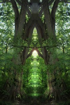 MY trees will do this without all that cheaty photoshopping.