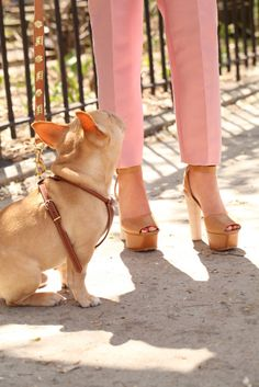 why do i not own a pair of pink pants?  or a frenchie?  lol