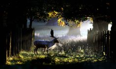 A Stag Walking Through the Early Morning Sunshine