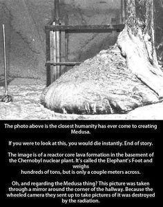 Real Medusa.