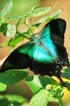 Funny Wildlife, Glow in the dark colours!