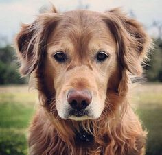 """""""Old dogs can be just as cute as puppies"""", just like people. It all shows on our face."""