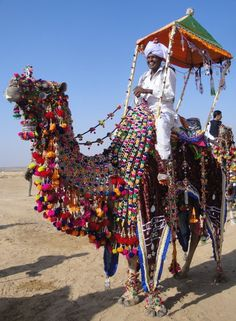 camel at Jaisalmer desert festival in India