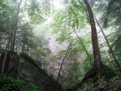 Natural Bridge State Park Ky Trail Map