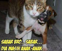 Cute Funny Animals, Cute Cats, Quotes Lucu, Cartoon Jokes, Funny Moments, Ulzzang Boy, Bad Boys, Comedy, Memes