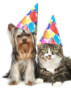 How do you calculate dog years or cat years?