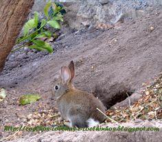 coelhos, coelhas e coelhinhos: A TOCA DO COELHO