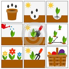 Germination Stock Illustrations, Vectors, & Clipart – (504 Stock ...