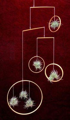 Amazing Hanging Air Plants Decor Ideas 7