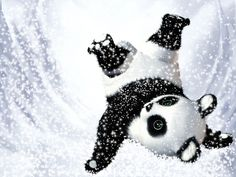 Cute panda bear. Snow