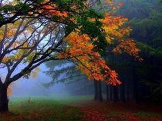 best nature wallpapers-fWTr
