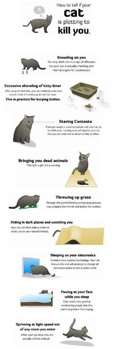 How to find out if your cat is plotting to kill you... good to know!
