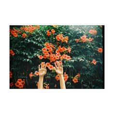 a walking travesty ❤ liked on Polyvore featuring pictures, photos, orange, backgrounds, flowers, fillers and wallpaper
