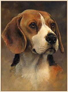 Are you interested in a Beagle? Well, the Beagle is one of the few popular dogs that will adapt much faster to any home. Cute Dog Photos, Dog Pictures, Bird Drawings, Animal Drawings, Art Beagle, Dog Portraits, Portrait Paintings, Wildlife Art, Animal Paintings