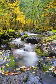 Autumn Flow  - Mike Dawson