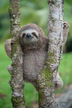 The Sloth institute Costa Rica