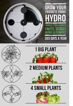 Root Farm Hydroponics brings fresh veggies, fruit, flowers to your table. Growing hydroponically is now easier than ever. All About Plants, Small Plants, Small Gardens, Outdoor Gardens, Hydroponic Herb Garden, Planting Vegetables, Vegetable Garden, Plant Science, Garden Beds