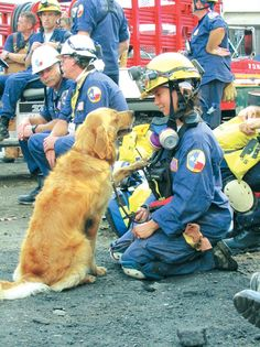 DOGS WERE HEROES TOO ~!~ one of the dog heroes of 9/11