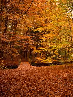 Lost In The Woods Bridge / 1896, fall / autumn walk vinyl decor / backdrop