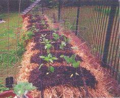 straw bale garden show's progress