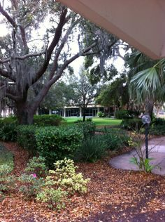 Eckerd College - pet friendly in florida applied Eckerd College, College Ready, Colleges In Florida, Cornell University, South Carolina, Places Ive Been, Travel Destinations, Dreams, Spaces