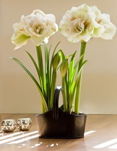 potted orchid wedding - Google Search