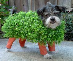 Chia Pet Dog Costume #Pet Costumes #Dog #Halloween #Costumes #Pets