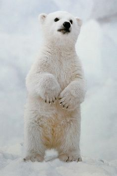 Image result for no power day for polar bears